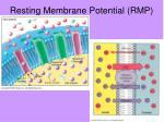 resting membrane potential rmp1
