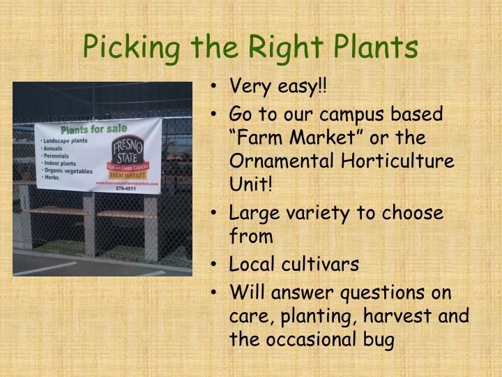Picking the Right Plants