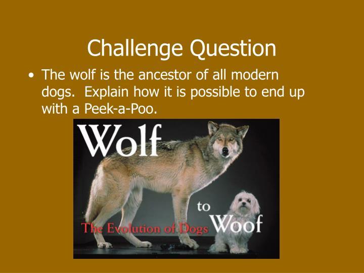 Challenge Question