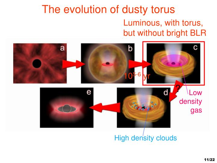 The evolution of dusty torus