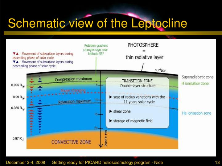Schematic view of the Leptocline