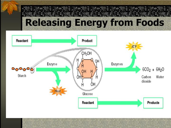 Releasing Energy from Foods