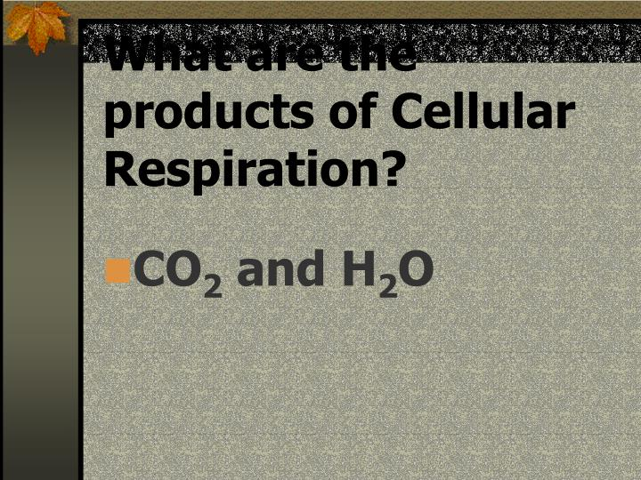 What are the products of Cellular Respiration?