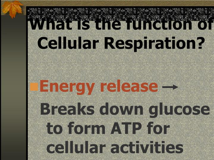 What is the function of Cellular Respiration?