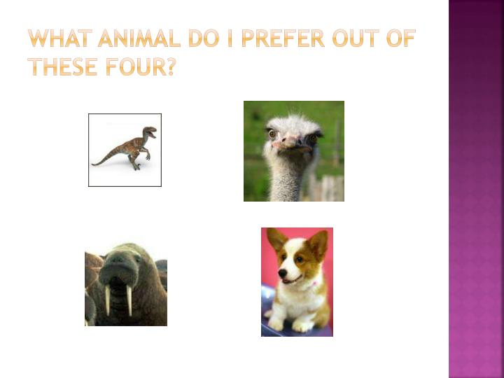 What animal do I prefer out of these four?