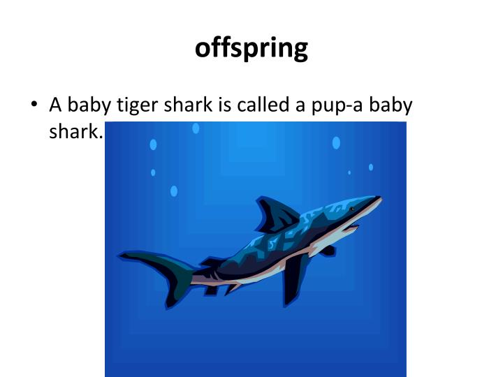 baby sharks being born