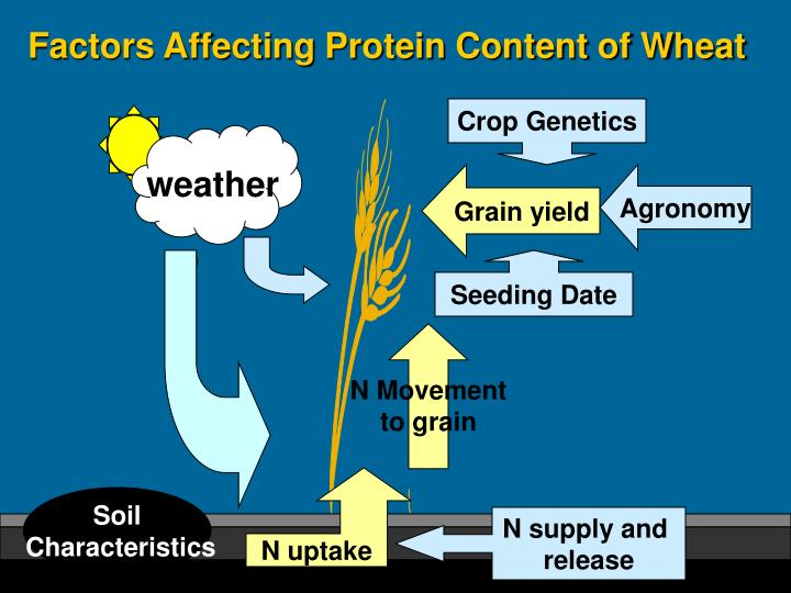 Factors Affecting Protein Content of Wheat