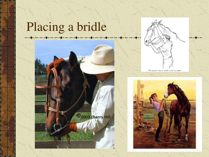 Placing a bridle