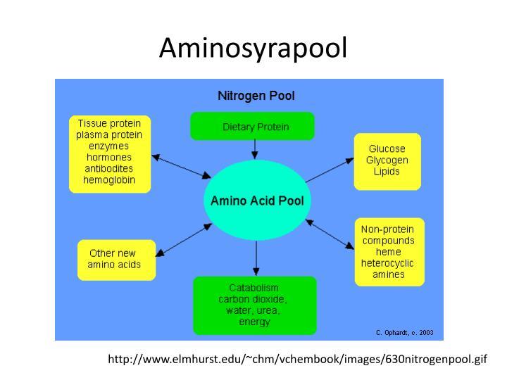 Aminosyrapool