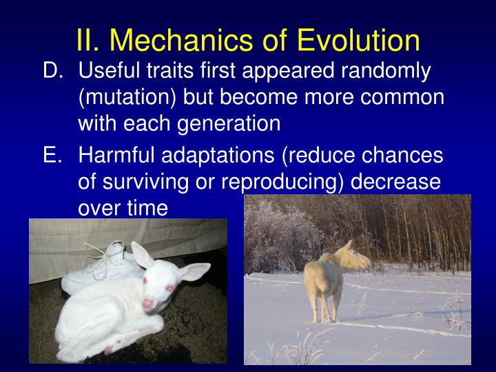 What Chooses The Individuals That Breed In Natural Selection
