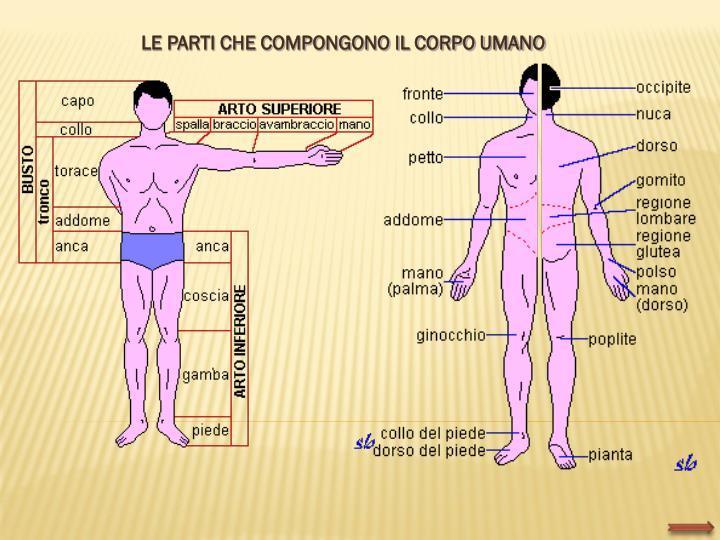 LE PARTI CHE COMPONGONO IL CORPO UMANO