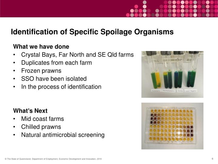 Identification of Specific Spoilage Organisms