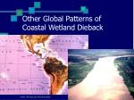 other global patterns of coastal wetland dieback