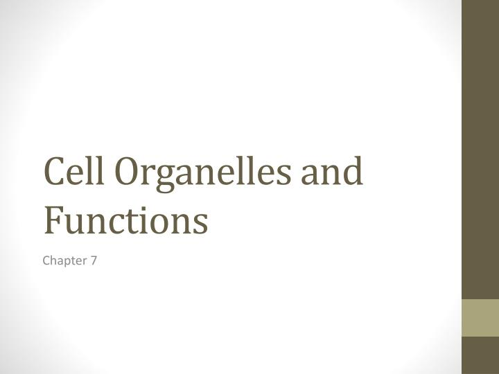 cell organelles and functions n.