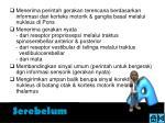 serebelum