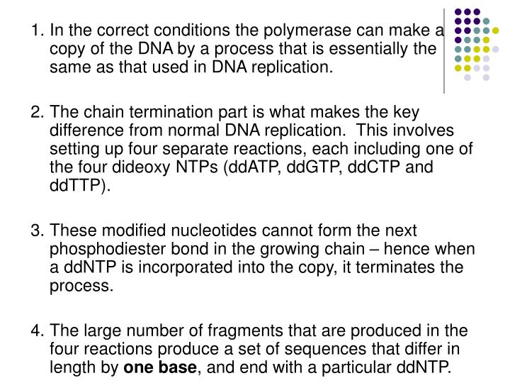 1.	In the correct conditions the polymerase can make a copy of the DNA by a process that is essentially the same as that used in DNA replication.