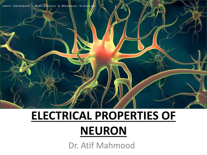 electrical properties of neuron n.