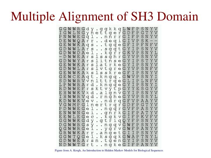 Multiple Alignment of SH3 Domain
