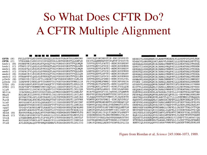 So What Does CFTR Do?