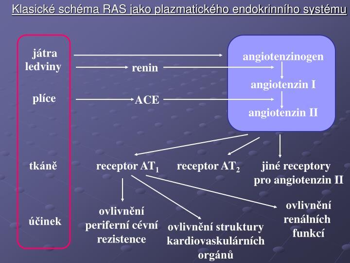 Klasické schéma RAS jako plazmatického endokrinního systému