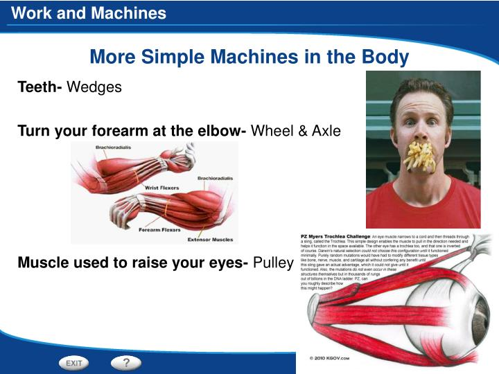 More Simple Machines in the Body