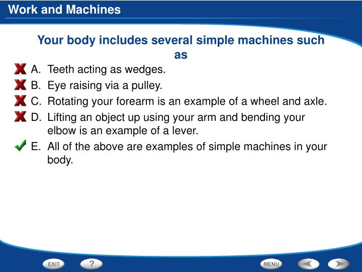 Your body includes several simple machines such as