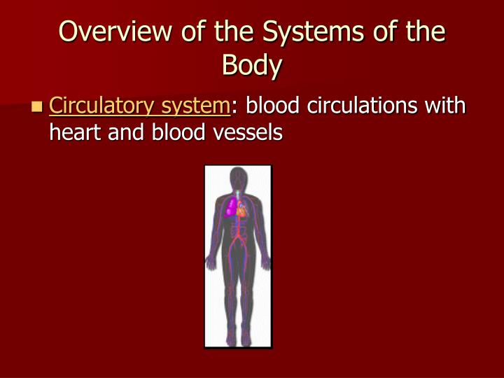 a research on the circulatory system