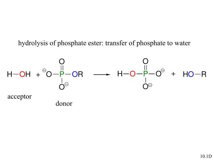 hydrolysis of phosphate ester: transfer of phosphate to water