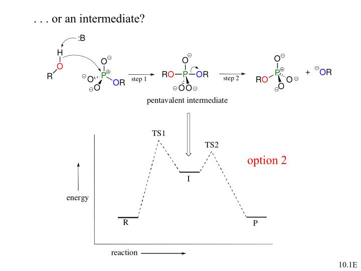 . . . or an intermediate?