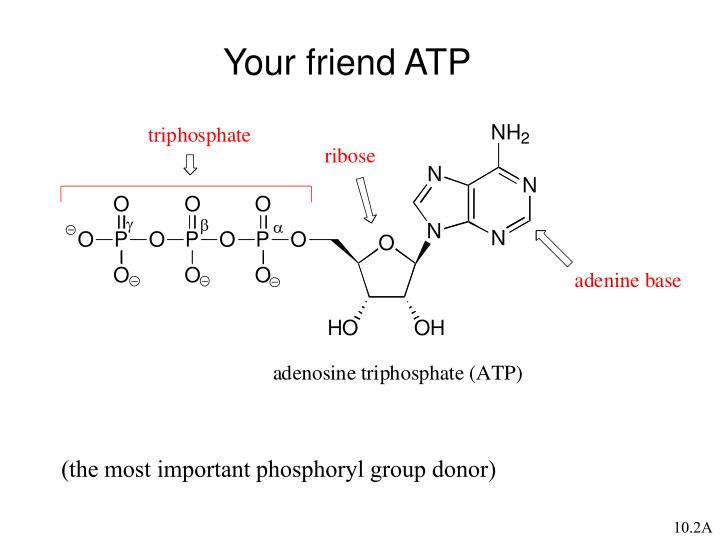 Your friend ATP