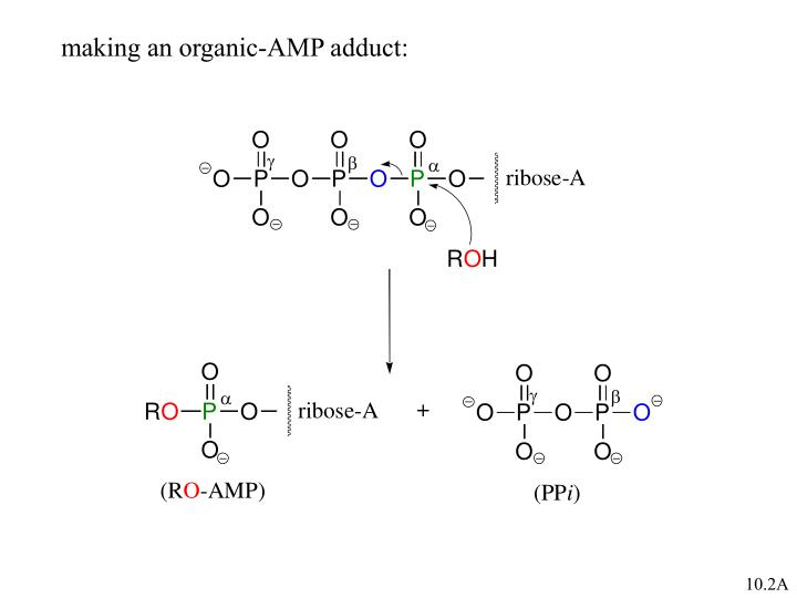 making an organic-AMP adduct: