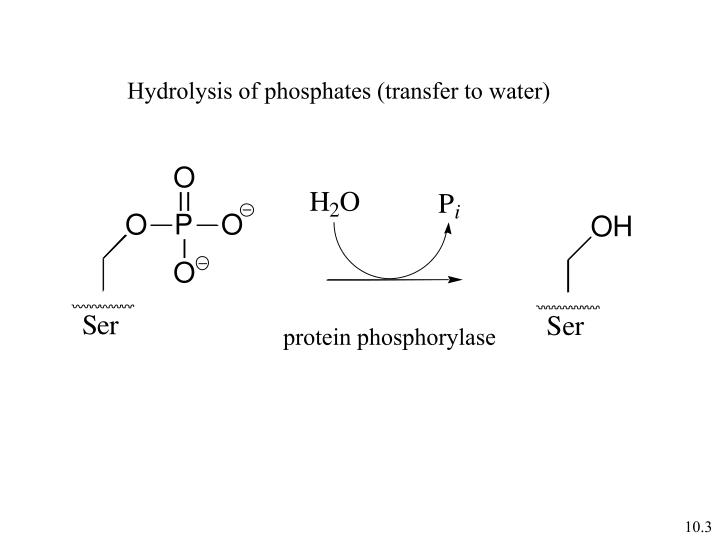Hydrolysis of phosphates (transfer to water)