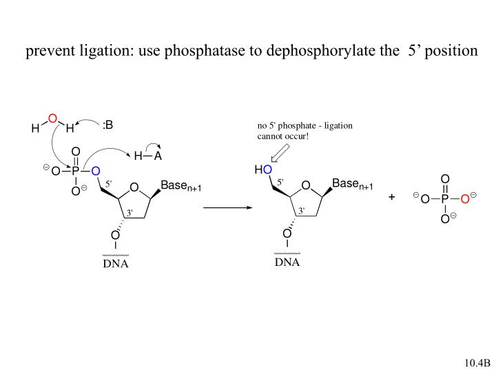 prevent ligation: use phosphatase to dephosphorylate the  5' position
