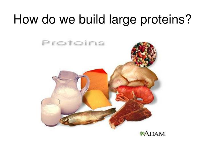 How do we build large proteins?