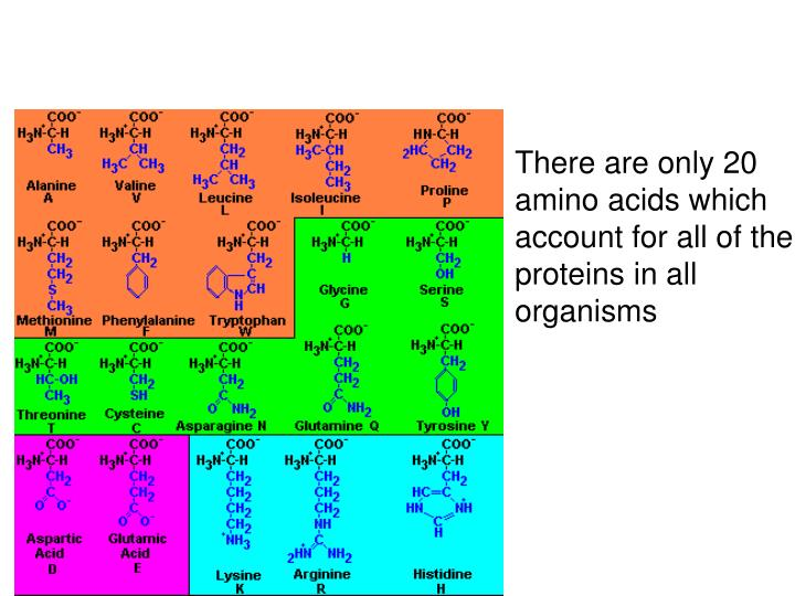 There are only 20 amino acids which account for all of the proteins in all organisms