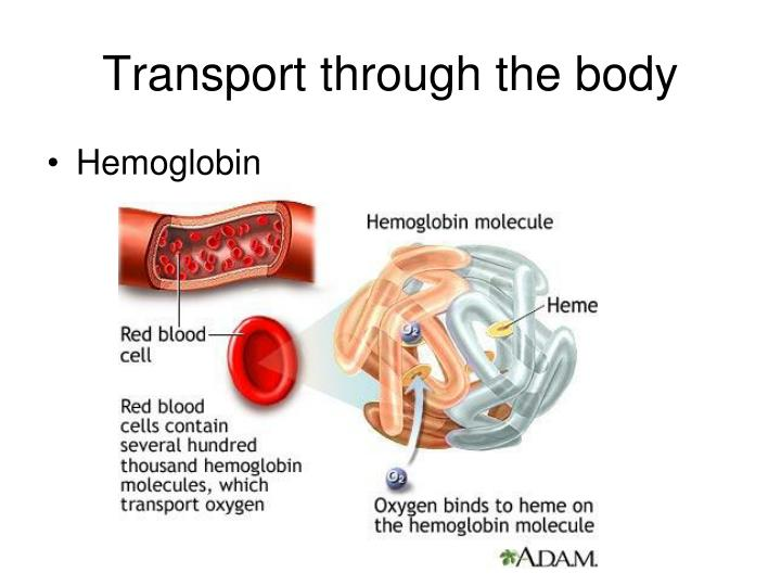 Transport through the body