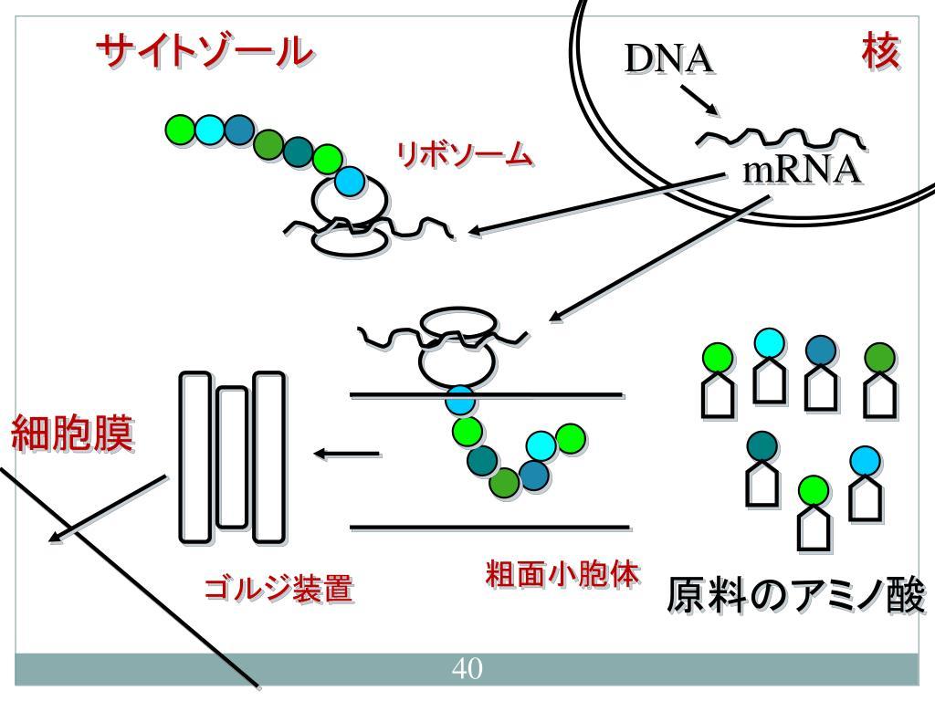 生物学 - PowerPoint PPT Presentation