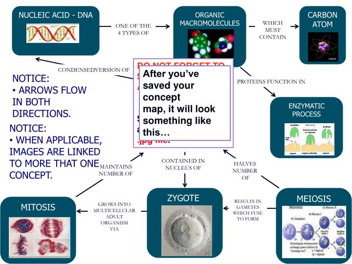 NUCLEIC ACID - DNA