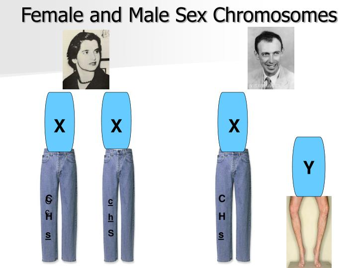 detection of low level sex chromosome mosaicism biology essay Sex chromosome aneuploidies, in mosaic and nonmosaic forms, result in recognizable syndromes such as turner syndrome (45,x and associated karyotypes) and klinefelter syndrome (47,xxy) sex chromosome dsd are defined by aneuploidy of the sex chromosomes, x and y.