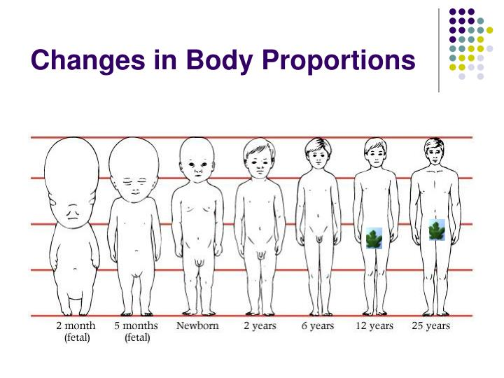 Changes in Body Proportions