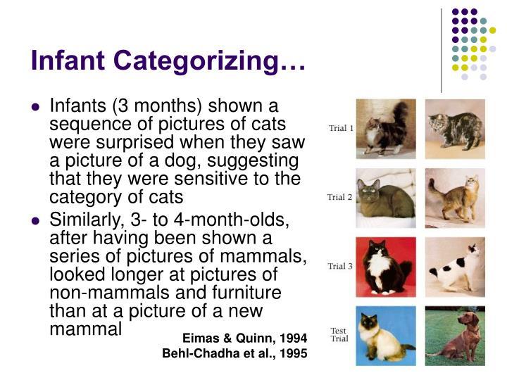 Infant Categorizing…