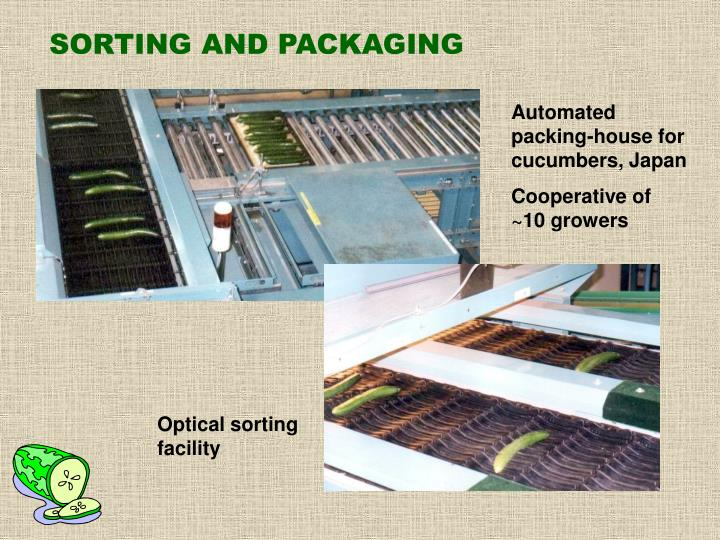 SORTING AND PACKAGING