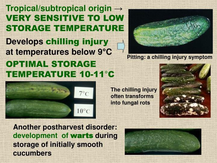 Tropical/subtropical origin