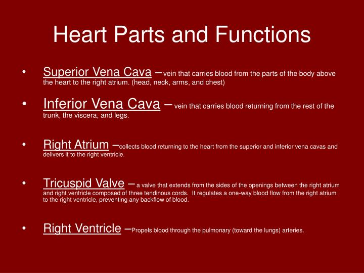 Ppt Blood Circulation Powerpoint Presentation Id3968481