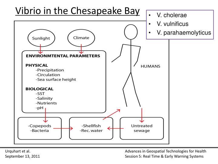 Vibrio in the chesapeake bay