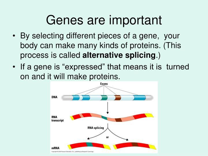 Genes are important