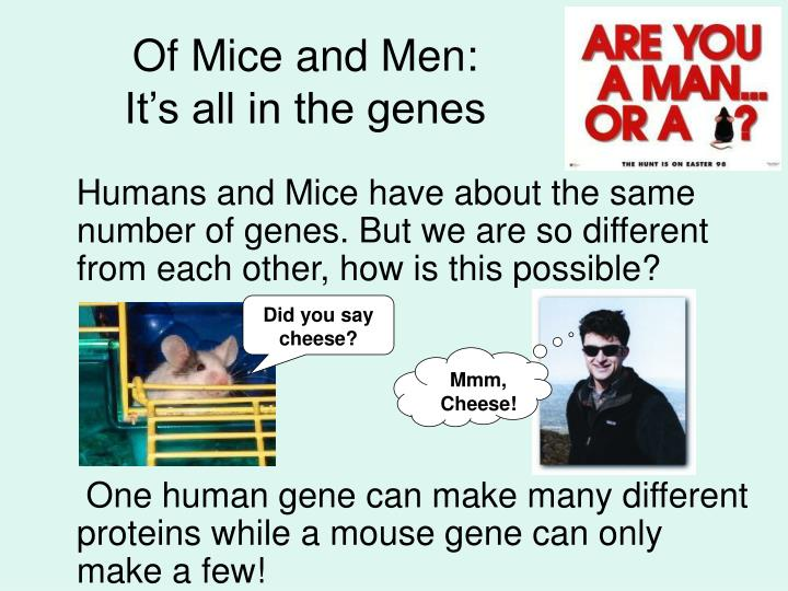 Of Mice and Men: