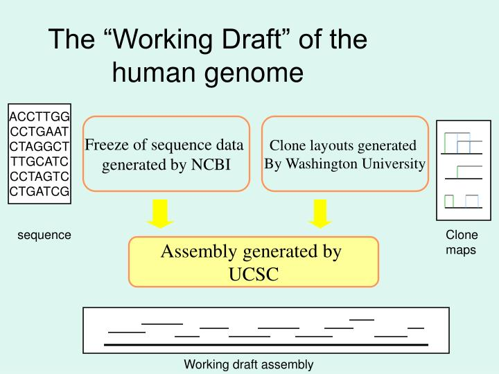 """The """"Working Draft"""" of the human genome"""