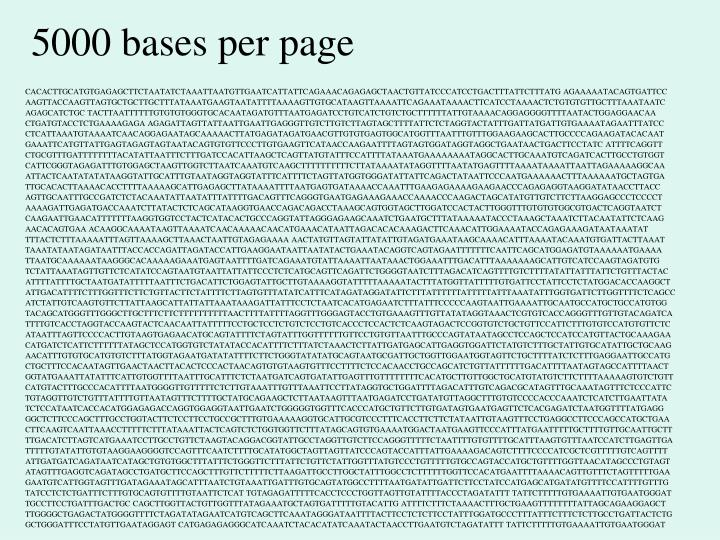 5000 bases per page
