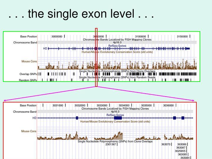 . . . the single exon level . . .